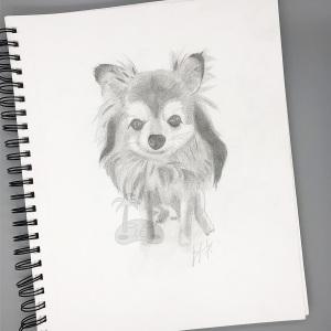 Little-Pup